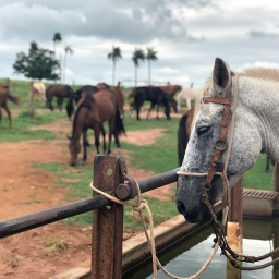 Fazenda Bela Vista – Brazilian Dude ranch