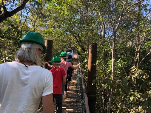 High trail through the trees